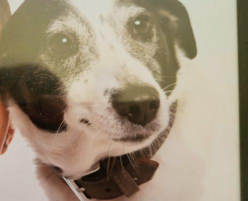 pet memorial gallery pawprints cremation